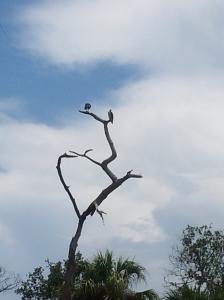 BirdsAndaTree